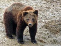ярославский-зоопарк-медведь